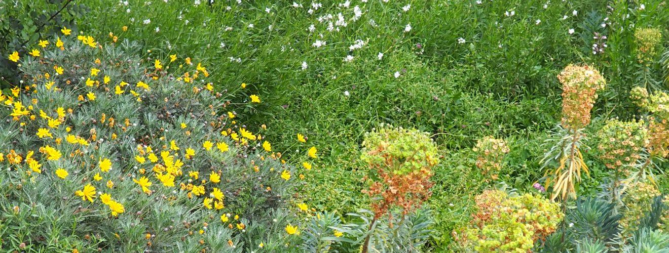Biologisk mangfold. Foto: Flickr